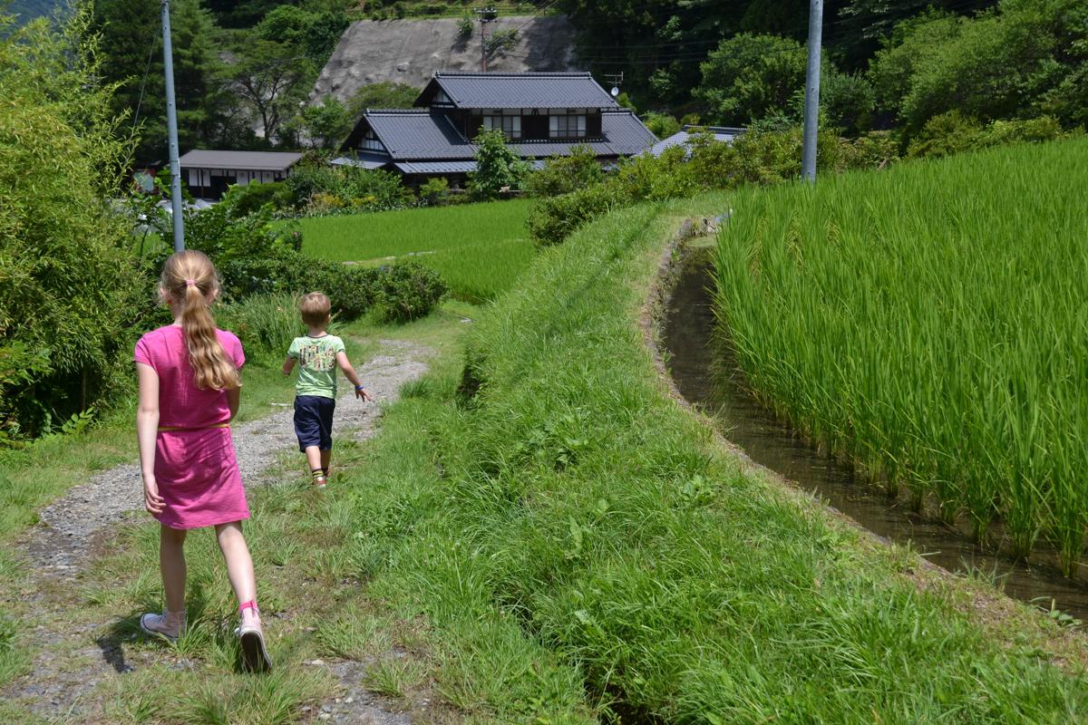 Japan - Children in green ricefields