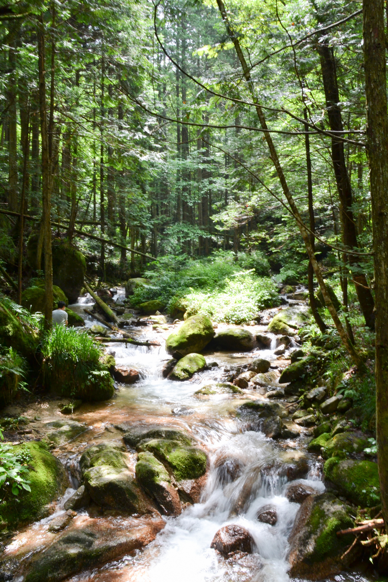 Japan - Waterfall river in forest